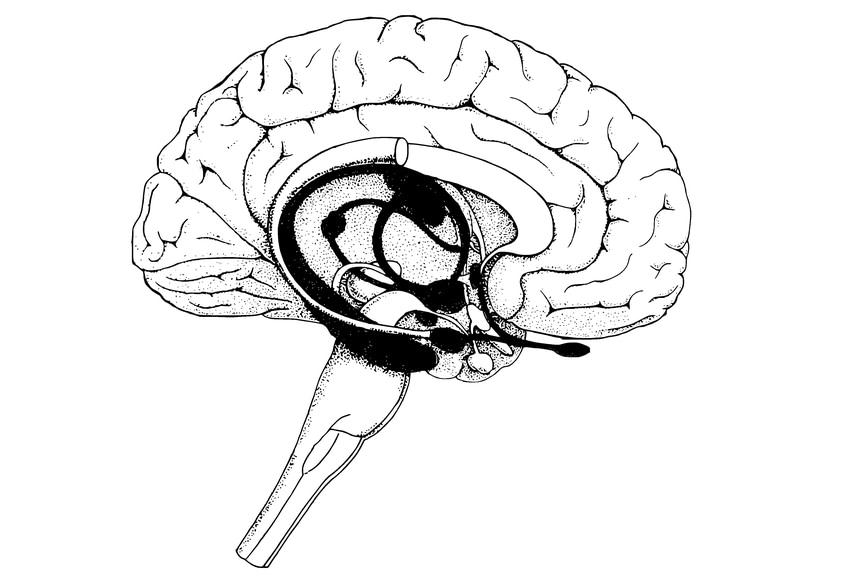 Neuromarketing für e-Shops