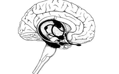 Neuromarketing und das Limbische System für e-Shops